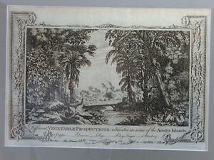 "Antique engraving:'Different Vegetable Productions..."" (c. 1782)"
