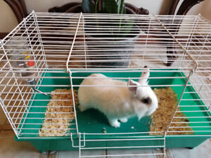 BUNNY FOR SALE W/CAGE