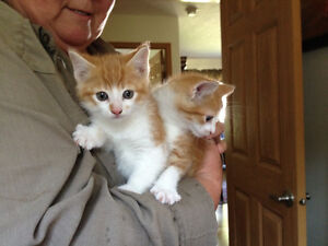 Mother's day kittens free to go.
