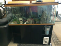 55 gallon fish tank,stand and accessories