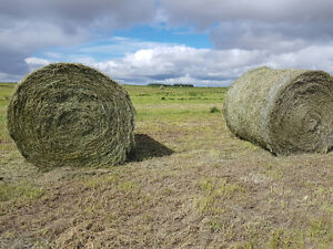 2016 1st and 2nd cut hay for Sale