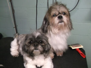 Small Breed Dog Grooming
