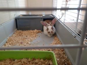 Male rabbit & cage!