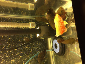 6 oscar for sale about 3 to 4 inches
