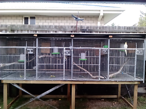 4 BAY SUSPENDED AVIARY ON STAND. Moodlu Caboolture Area Preview