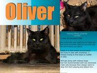 beaux chats et chatons noirs à donner