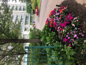 Room in 2 bedroom apartment 6 month sublet!