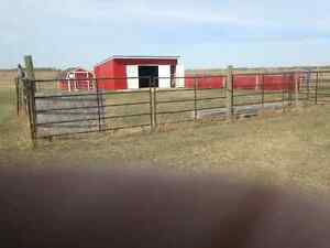 24 X 24 Foot Cattle Shelter