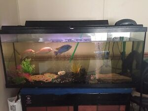 55 Gal Fish tank, everything included $300 OBO
