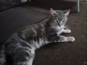 Found Cat in Mount Forest, Ontario
