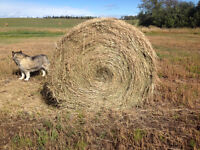1200 lb organic oat hay bale