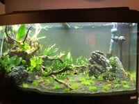 Aquarium 45 gallons pour plantes fluval