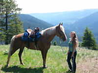 Ultra Smooth Tennessee Walker - VIDEO