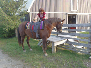 Horse Boarding - private stables/monthly rate