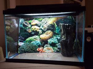 Fish Tank/ Aquarium - 20 Gallon High 24x12x16