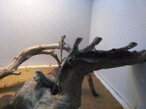 Baby Dragons Ready This Friday ! $60 each tax in ..