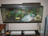 50 gallon fish tank , stand and accessories