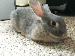 Female Rabbit