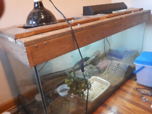 selling 150 gallon aquarium with 21 inch water water dragon