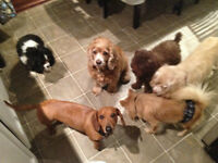 Dog Sitting for Small to Medium Size Breeds