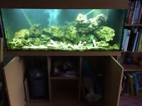 Juwel marine 240L tank, live rock, external filer + osmosis system