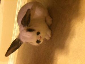 Cute bunny for sale