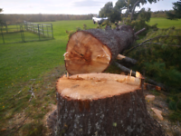 Dangerous tree removal, climbing, felling and branch trimming.