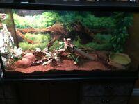Large terrarium/ snake tank