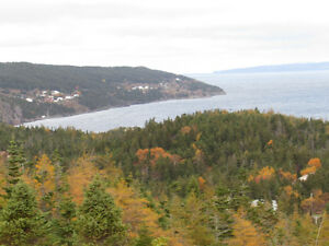 2.5 ACRE BOREAL FOREST ESTATE…38 DOCK RIDGE ROAD, AVONDALE. St. John's Newfoundland image 6