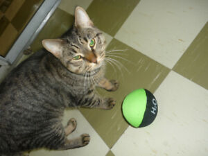 Max the Cat is Available for Adoption!