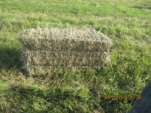 2017 FIRST CUT HAY FOR SALE