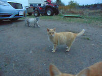 Female timid cat searching for a home.