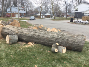 12 1/2 ft sugar maple log for sale