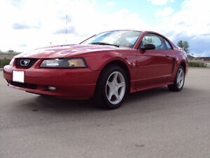 Ford Mustang GT V8 35th anniversary LOW KMS Great Condition