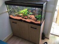 180ltr Tropical Fish Tank & livestock, complete set up