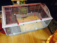 male guinea pigs with cage and food.