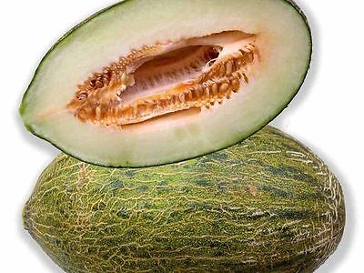 20 SEMI-DI Melone Piel de Sapo o melone sardo