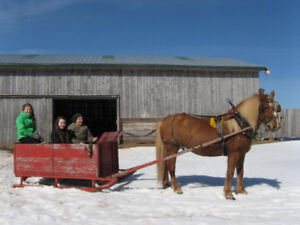 Horse/Pony Sleighs, Cart, Wagon, Collar and Hames.