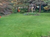 LAWN CLEANUP AND MAINTENANCE SERVICES