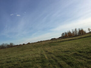 7.7 Acres Near Camrose For Sale