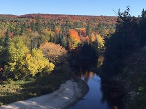 Last chance to come see Muskoka's fall colours!
