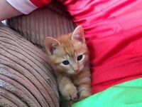 Beautiful kitten plus lots of extras