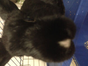 A cute friendly rabbit looking for new home