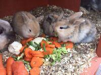 Rabbits bunnies