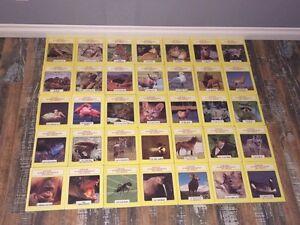 Collection sur les animaux