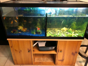 78 gallon aquarium