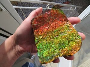 Dragon Skin Ammolite Pieces
