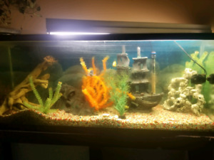 120 gl fish tank with everything