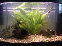 200 Ltr tropical aquarium.