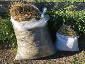 Hay for small household animals